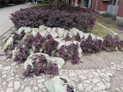 【环境美化】最是一年春光好,植树添绿正当时